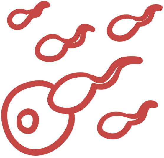 Egg and sperm graphic